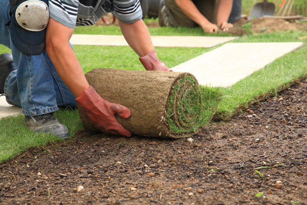 What To Look For When Choosing Your Commercial Landscaper